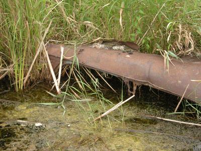 Car Body Sunk in Wetland